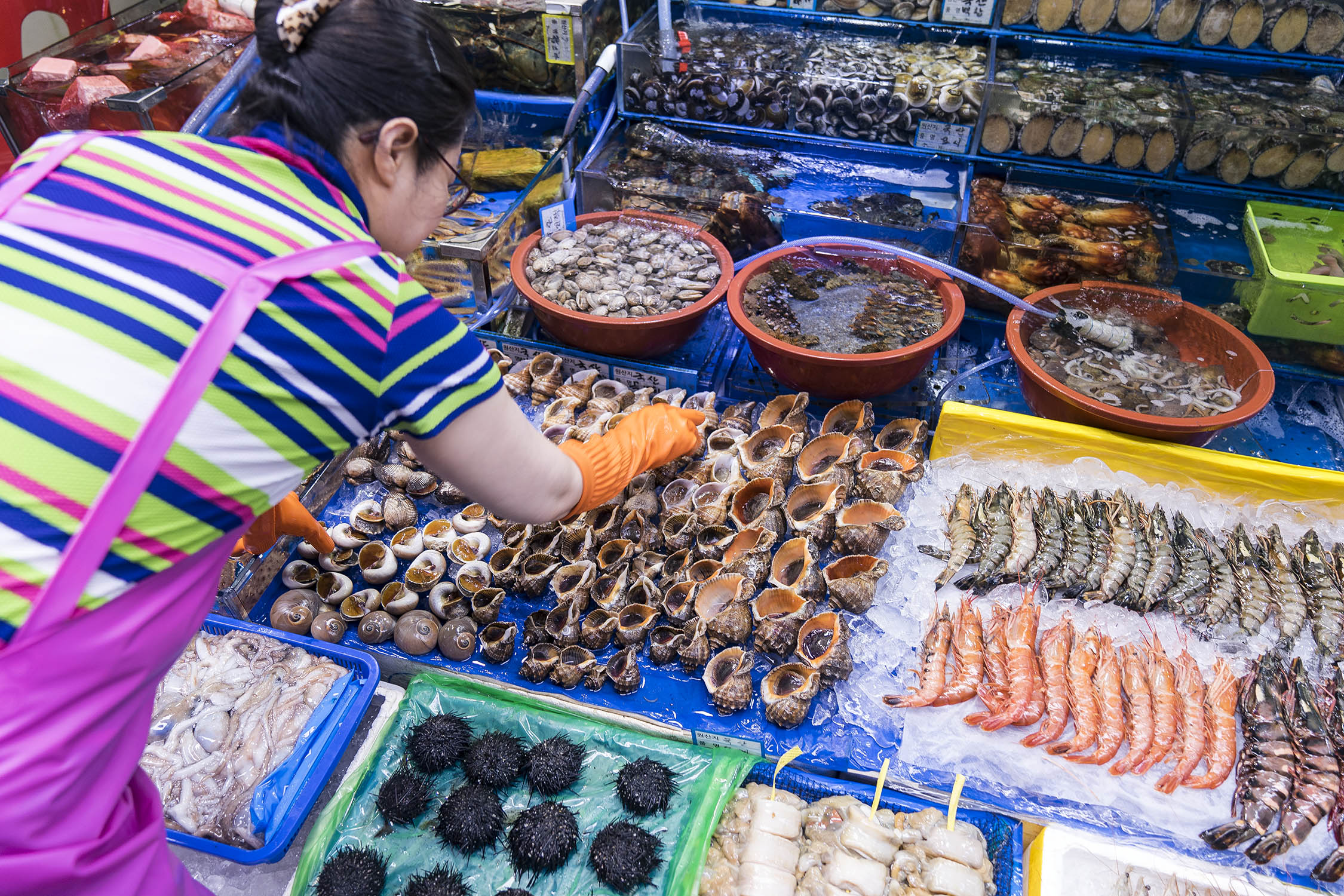 Sea urchins, abalone and more fresh shellfish