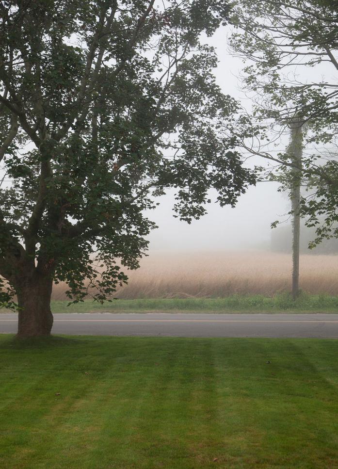 GG.Misty tree.png