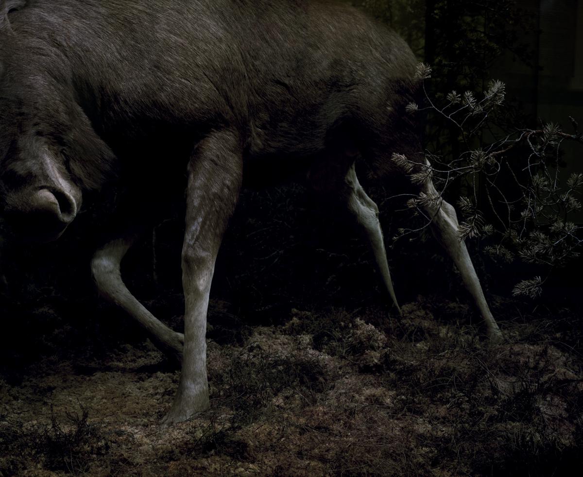"Anne Golaz, de la série ""Metsästä - from the woods"", 2010-2012"
