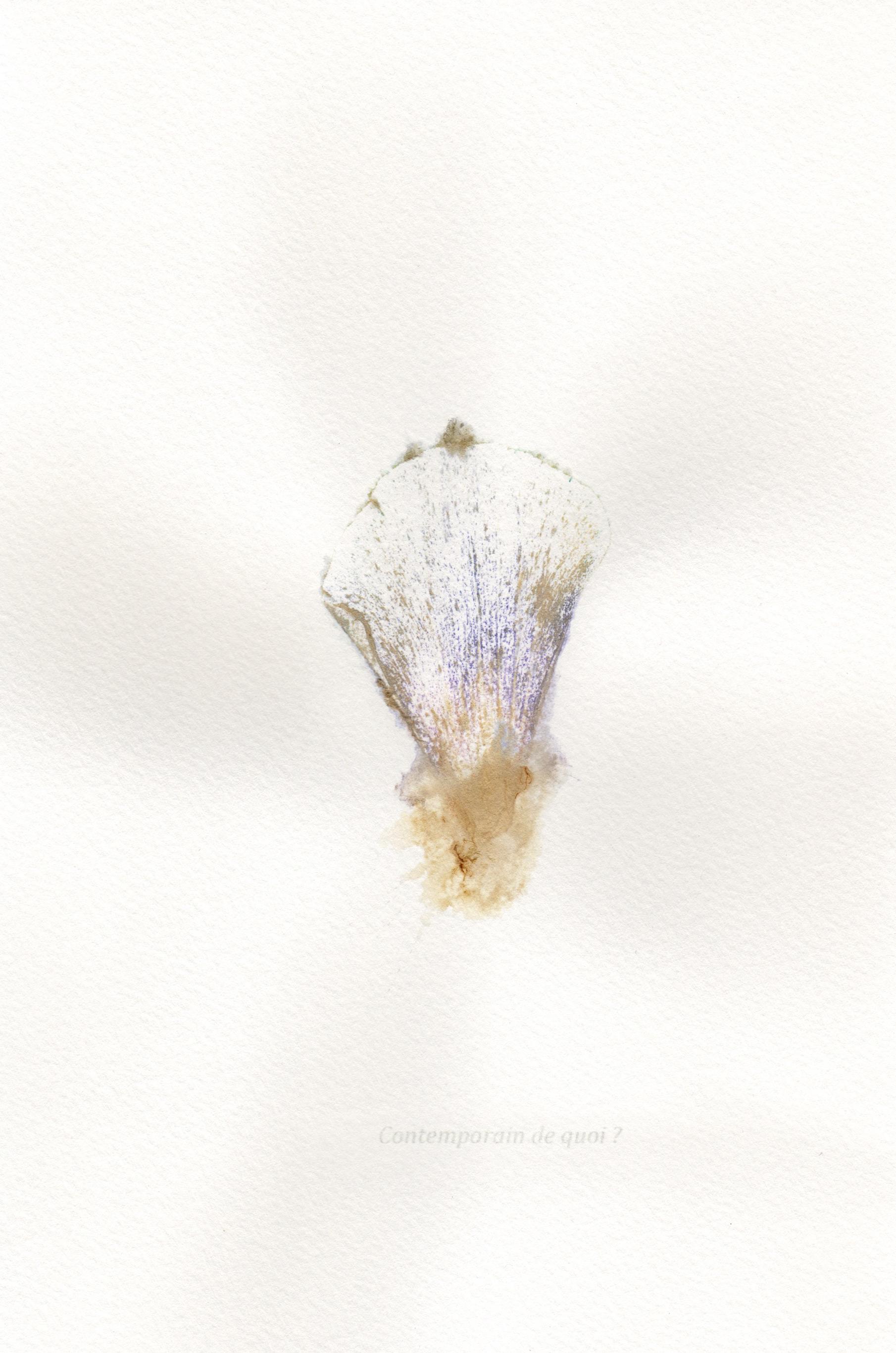 """Jérémie Bennequin, """"Contemporain de quoi?"""", 24 x 16 cm, pigment naturel de fleur sur papier, 2016"""