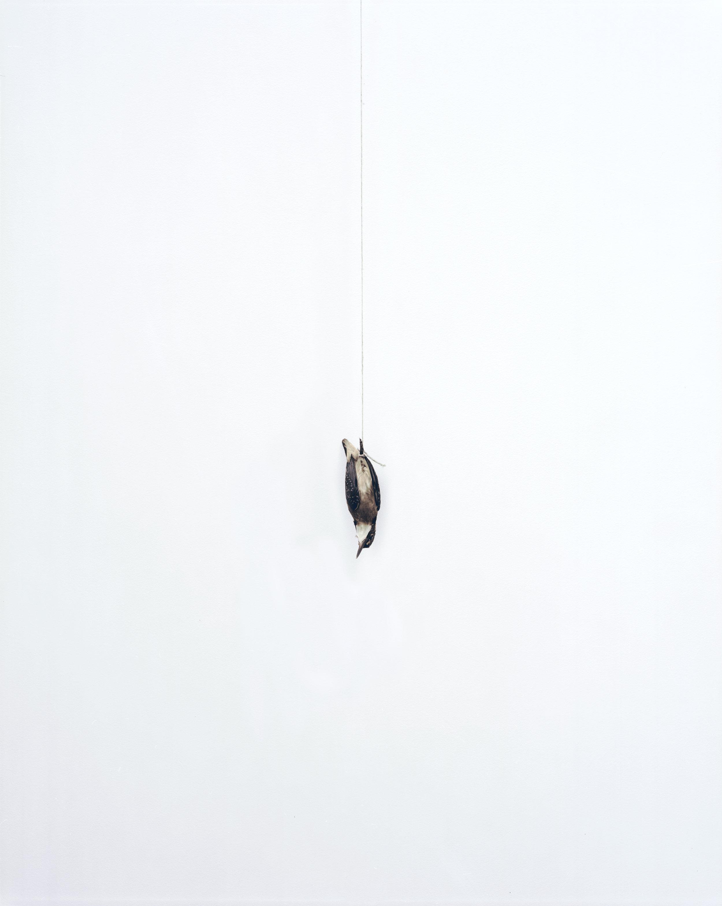 """Éric Poitevin, """"Sans Titre"""", de la série """"Oiseaux"""", 2012-2013"""