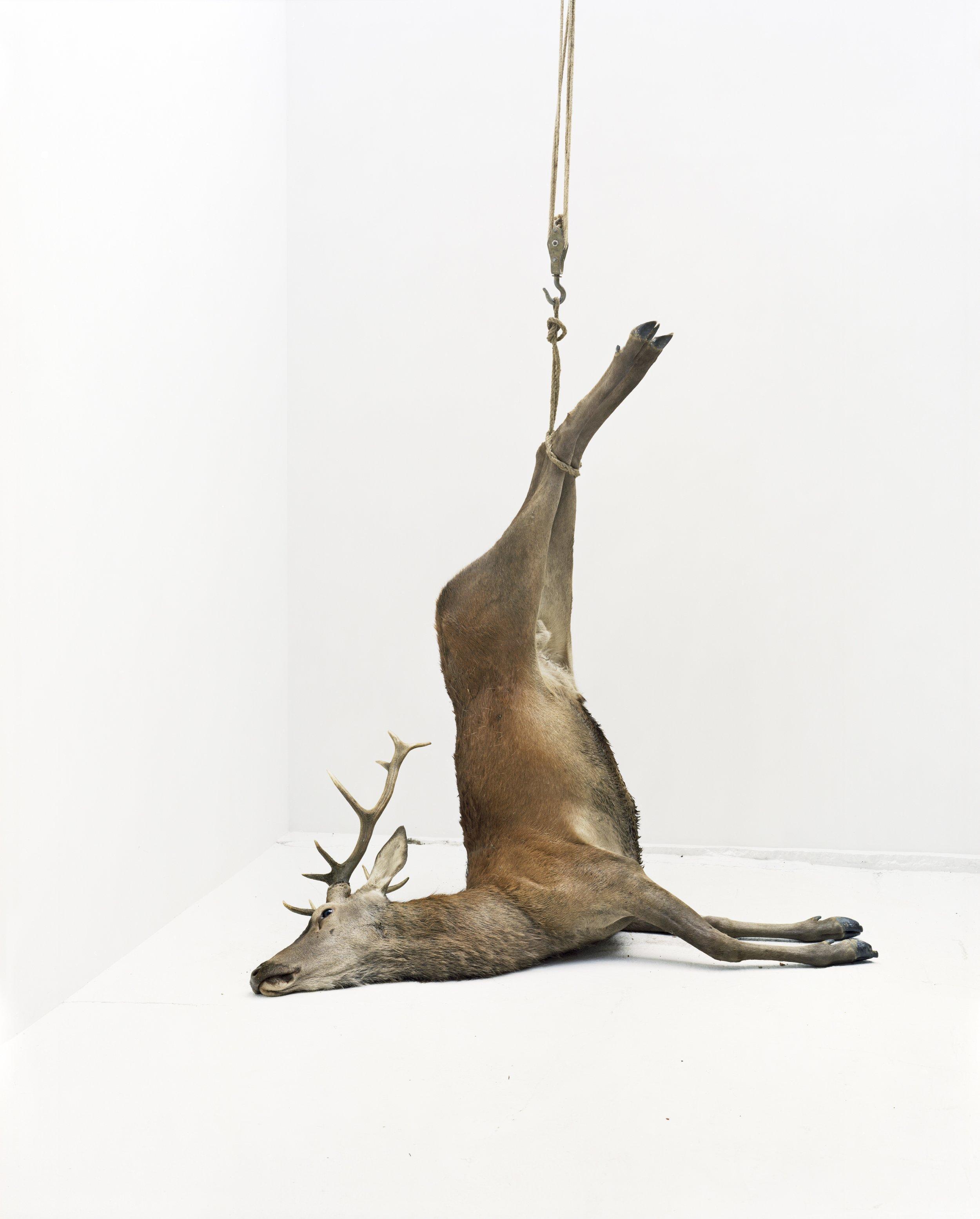 """Éric Poitevin, """"Sans Titre"""", de la série """"Cerfs, mouflon, daim, domaine de Belval"""", 2005"""