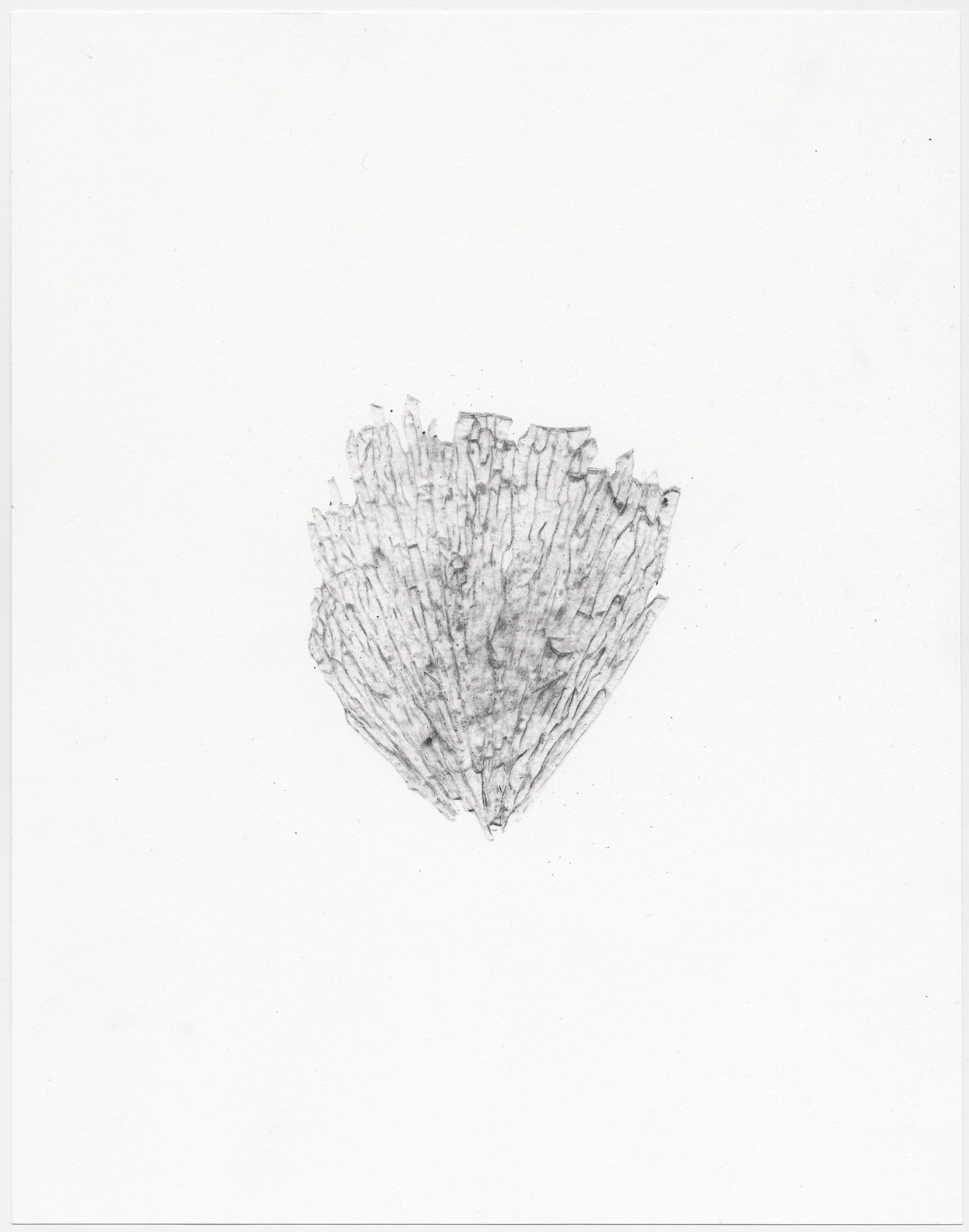 © Sophie Jodoin, %22elle commence ici 18%22, graphite et transfert carbone sur papier Stonehenge : graphite and carbone transfer on Stonehenge paper, 35,5 x 28 cm, 2018. Courtesy Galerie C.jpg