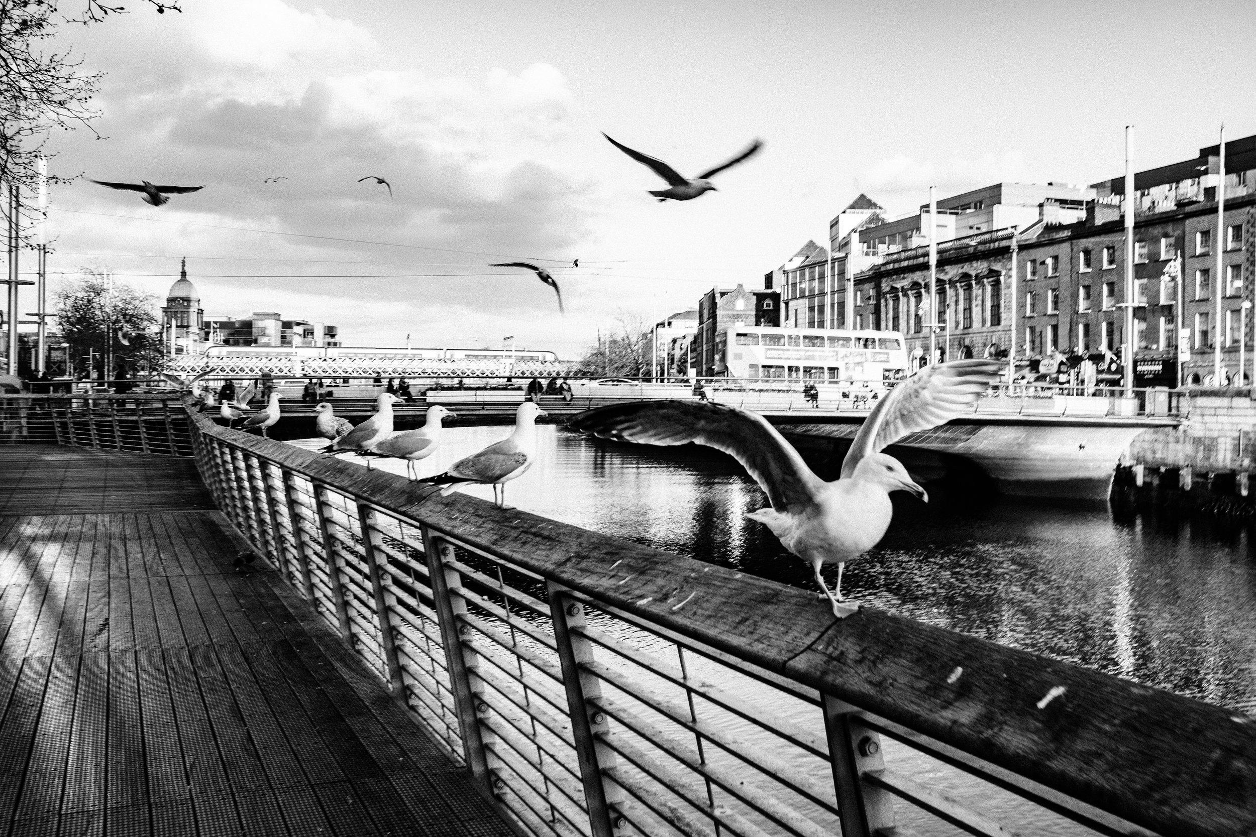 Ireland Edit-61.jpg