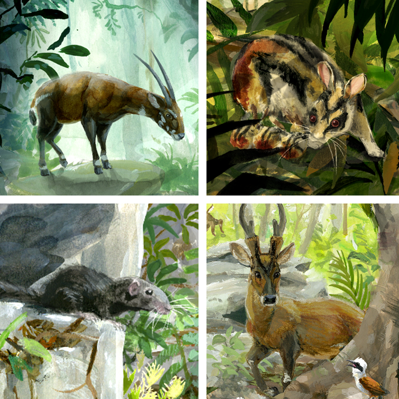 Recent Annamite mammal discoveries include (clockwise from top left): the Saola, Annamite Striped Rabbit, Large-antlered Muntjac and the Kha-nyou.