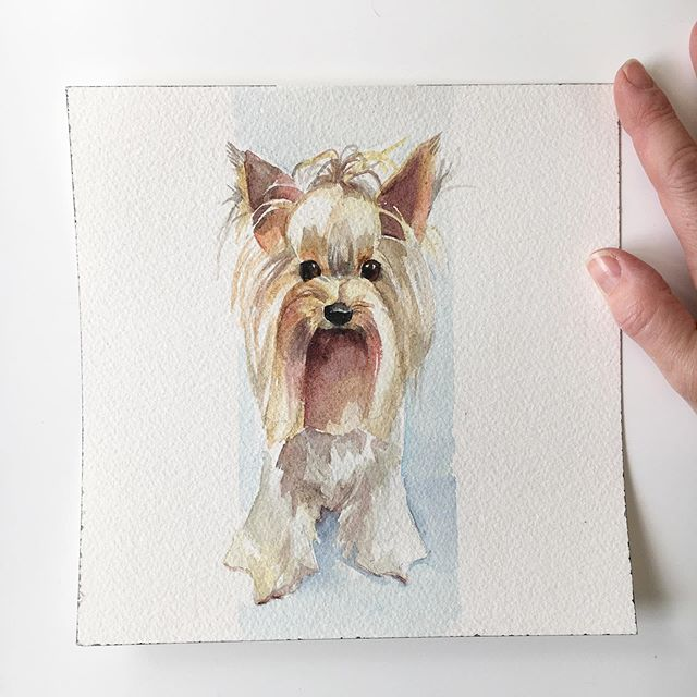 Yorkshire Terrier  20 x 20cm Commission  #dogportrait #hund #perro #собака #watercolouronarches #petpooch #longhairedhound #goinghometosweden #swedish #english #suffolkartists