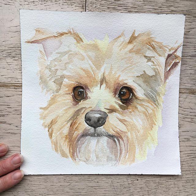 Terrier portrait 20 x 20cm  #dogportrait #hund #perro #собака #watercolouronarches #petpooch #cute #cuteterrier #goinghometosweden #swedish #english #suffolkartists