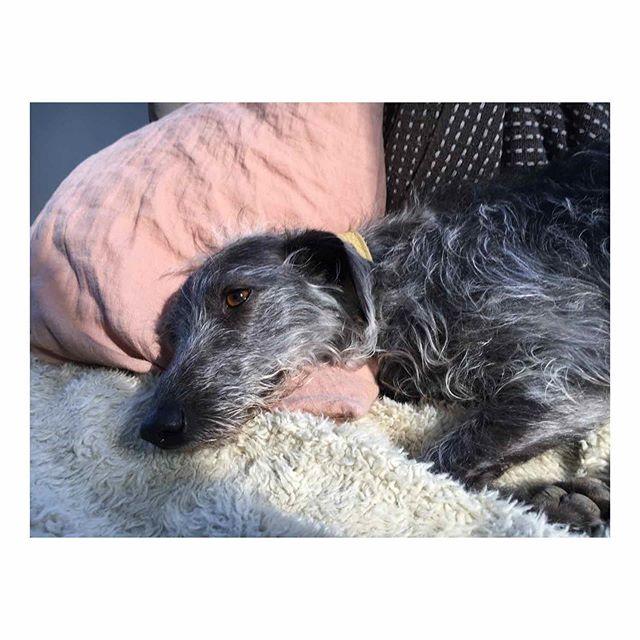 Bonnie resting on the sofa