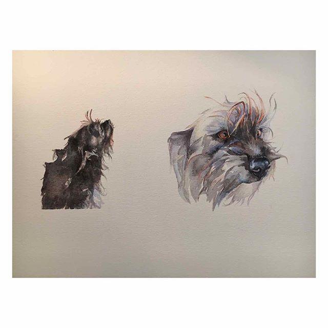 Terrier portrait Commission  #dogportrait #hund #perro #собака #watercolouronarches #petpooch #cute #cuteterrier #patterdaleterrier #patterdale #northernterrier #swedish #english #suffolkartists