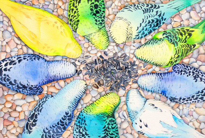 Parakeets eating.jpg