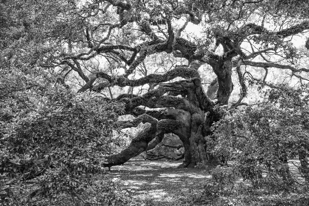 Angel Oak.jpg