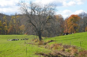 Shenandoah Farm lies at the corner of I-84 and the Taconic Parkway.