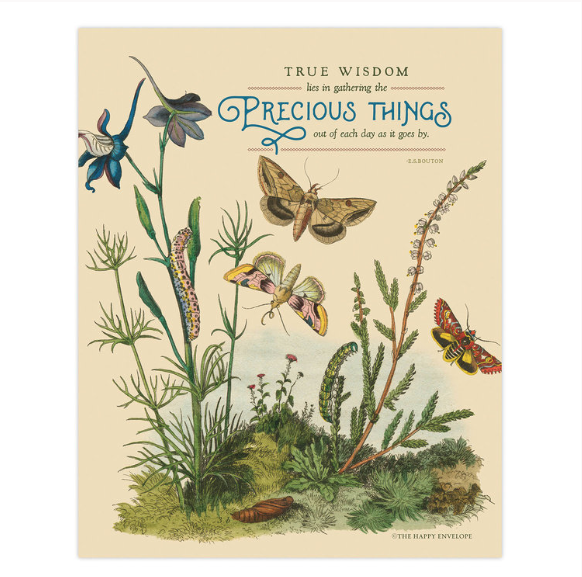 True wisdom lies in gathering the precious things out of each day as it goes by. -Bouton