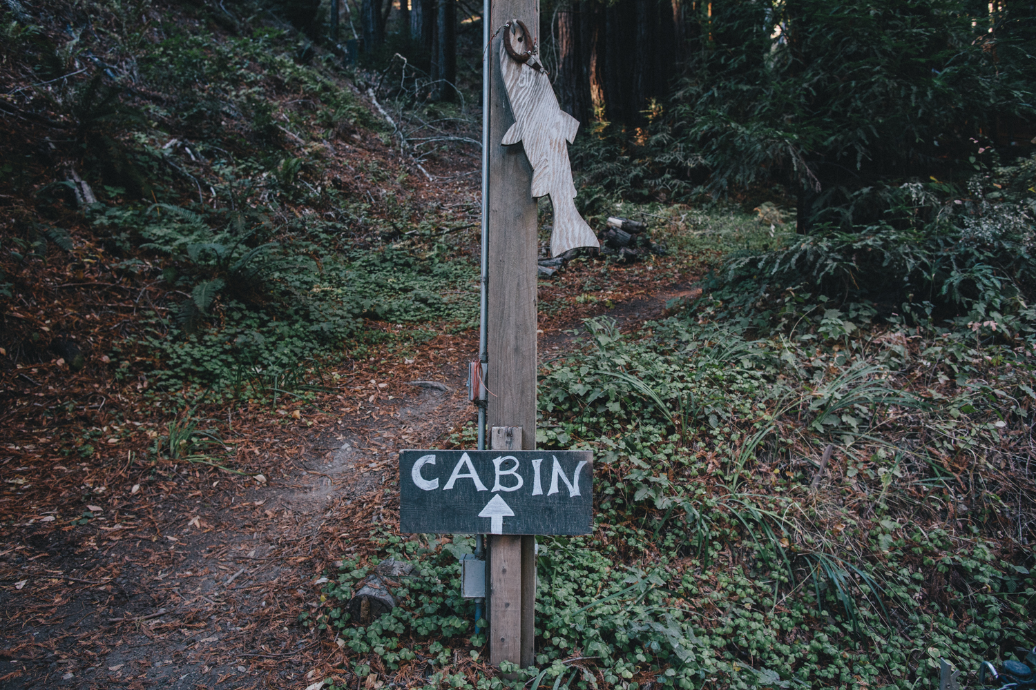 Pescadero Forest Wedding Rachelle Derouin Photographer-2.jpg