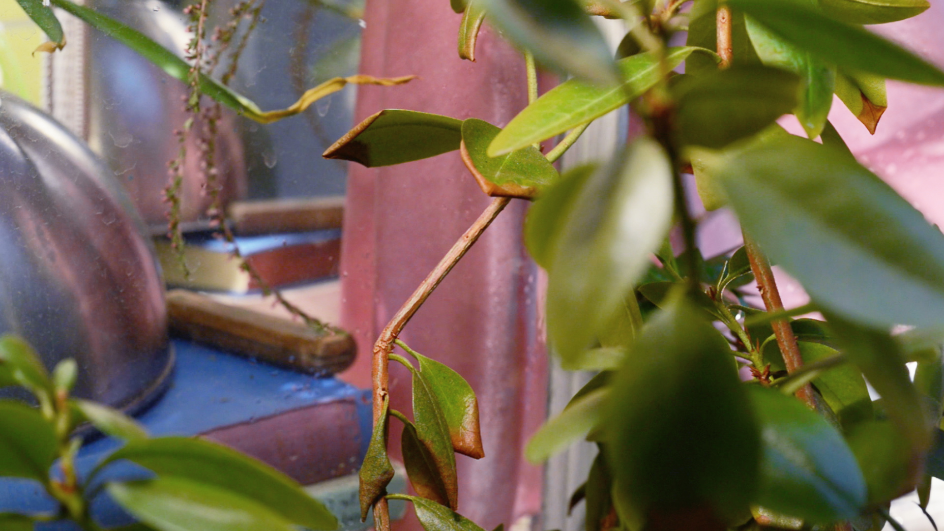plants_nightgown.jpg