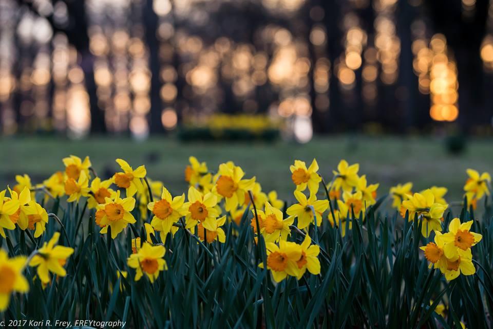 NT-Flowers.jpg
