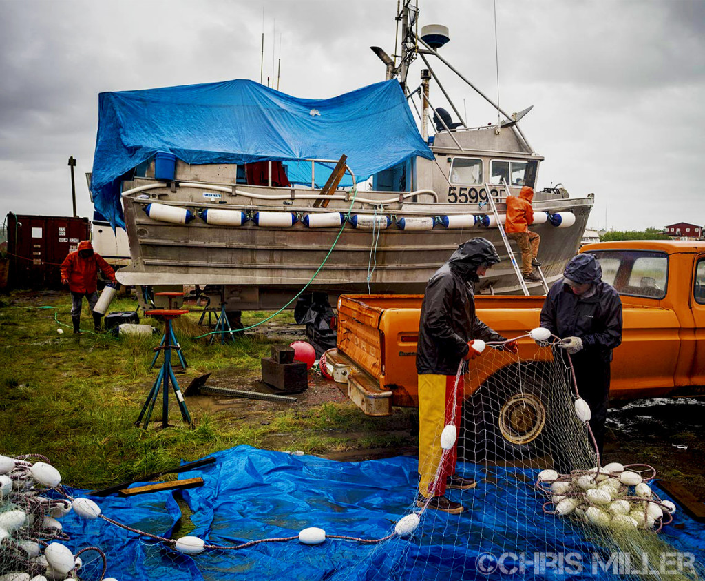 Jason Kohlhase and Jonathan Adams of the F/V Icy Bay work on their nets while the crew of the F/V Ghostrider does boat projects in the upper Lummi Yard in Naknek. Bristol Bay gillnets are typically hung in four separate shackles, sections of net, so that damaged or old shackles can be easily replaced and to rotate through the nets faster when they are full of sockeye. Nets are 150 fathoms, 900 feet, in length for a single permit; boats with two permit holders onboard get an extra 50 fathoms.