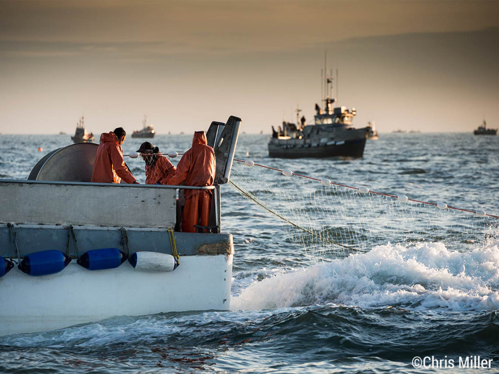 The total run prediction for this year now exceeds 40 million sockeye. With their work cut out for them, the crew of the F/V Mighty Loetta sets out the net to start an early morning opener on Egegik's South line.