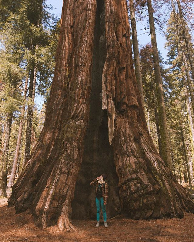 @_kalliemarie_  captured me standing next to a Sequoia tree in April 2018. We were coming down from a long hike we did that morning. The hike was fun but there was no view from all the fog at the top. But it was still cool, it felt like we were in a cloud.