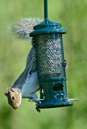 squirrel-buster-r1.jpg