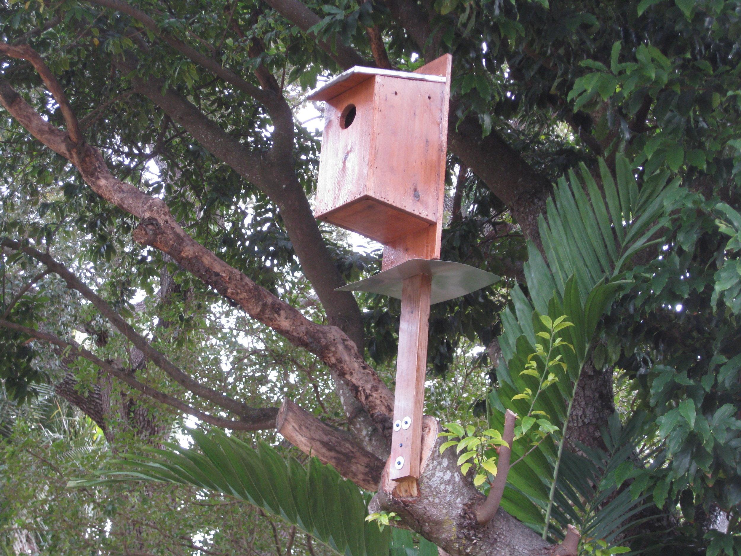screech owl box3.jpg