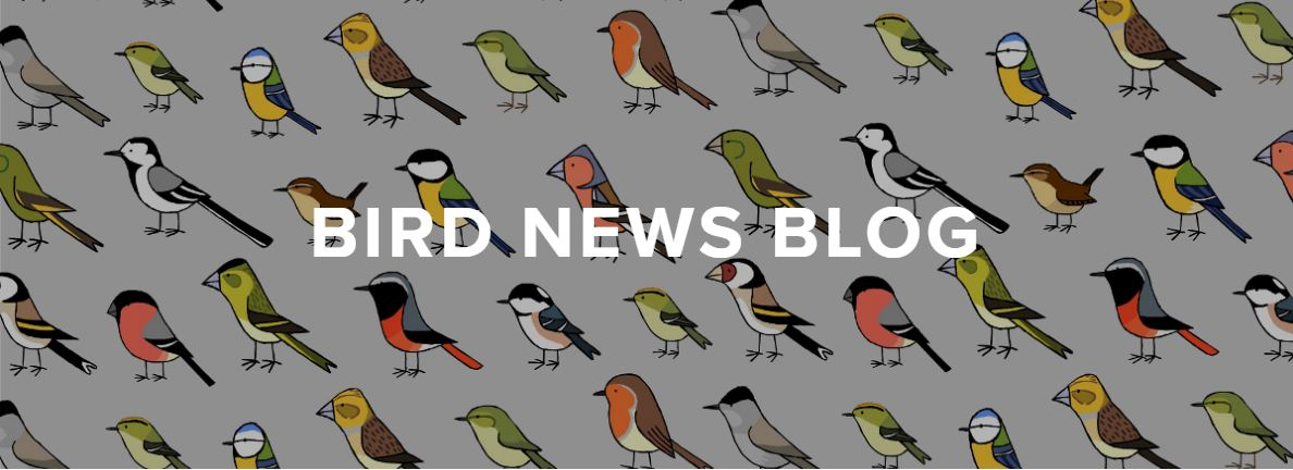 Bird news blog banner.JPG