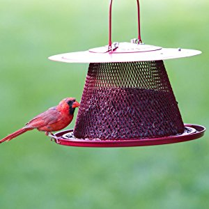 The cardinal feeder has a wide tray at the base that cardinal prefer.
