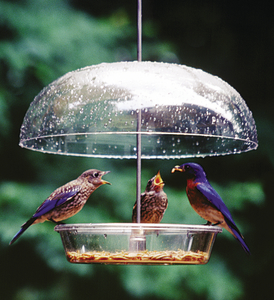 Domed feeders can be adjusted to help discourage larger birds.