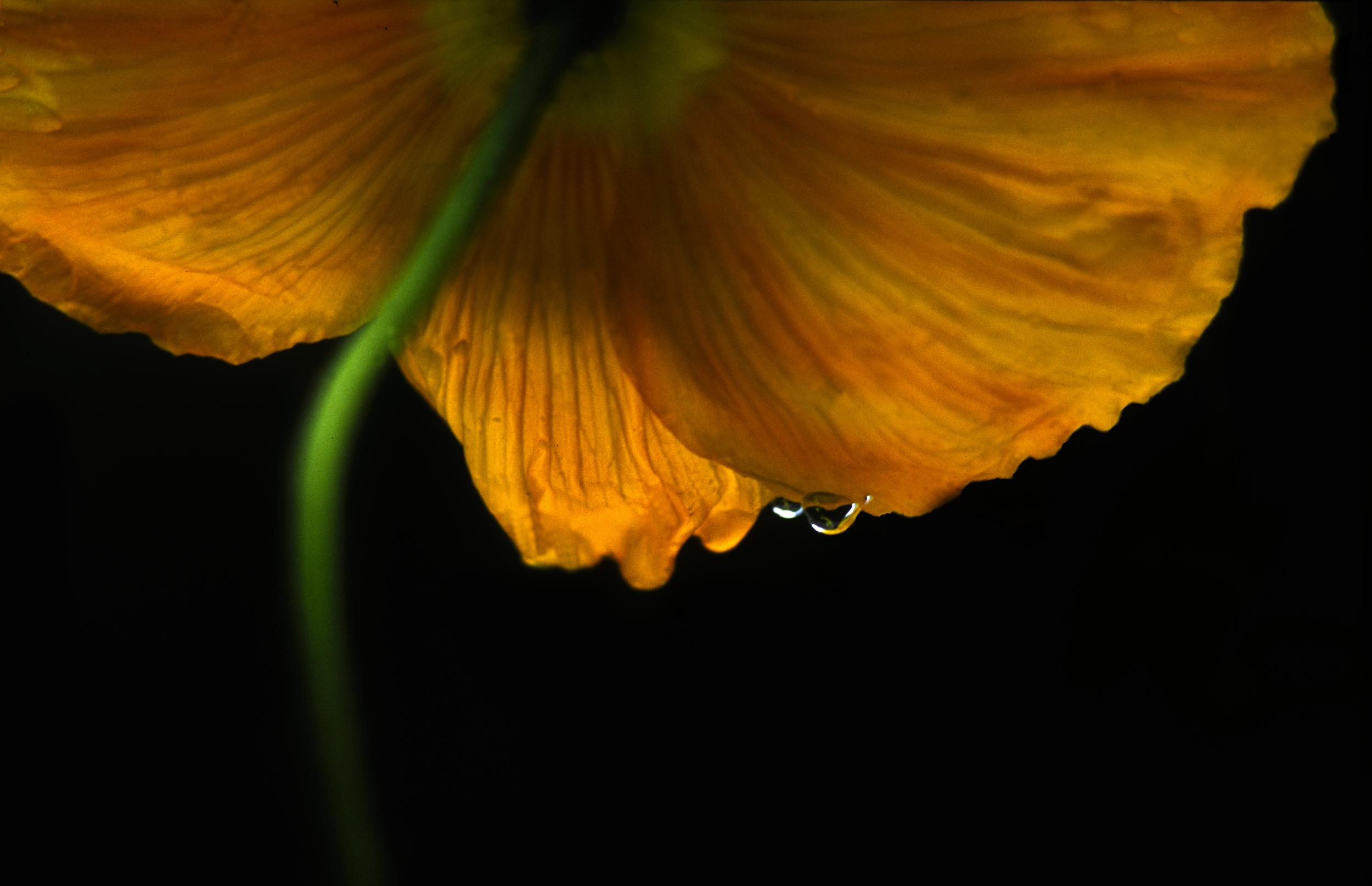 20011123-flower 1 8x10.jpg