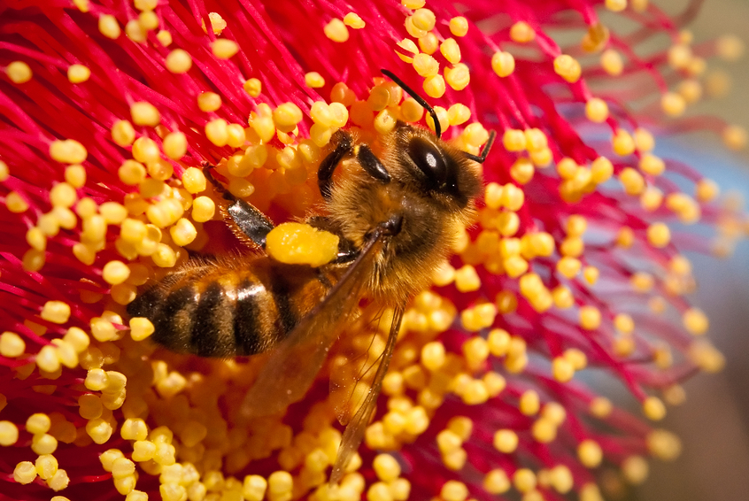 Bees are barometers of the health of our world - we are partnering with organisations to help save the bees.