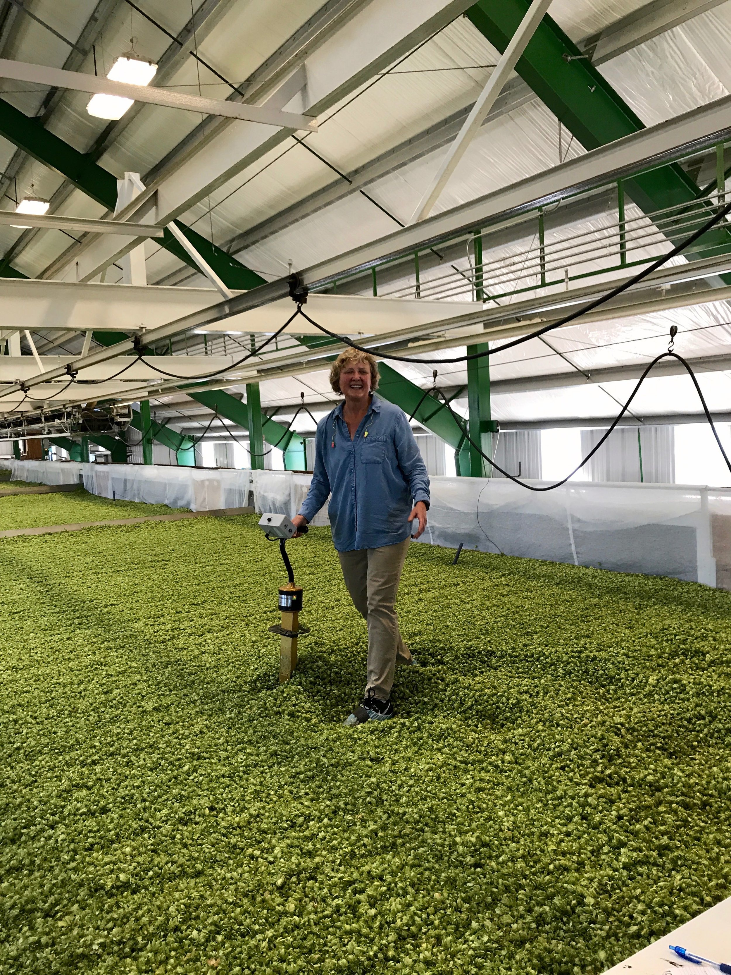 Gayle measures the moisture of the hops.