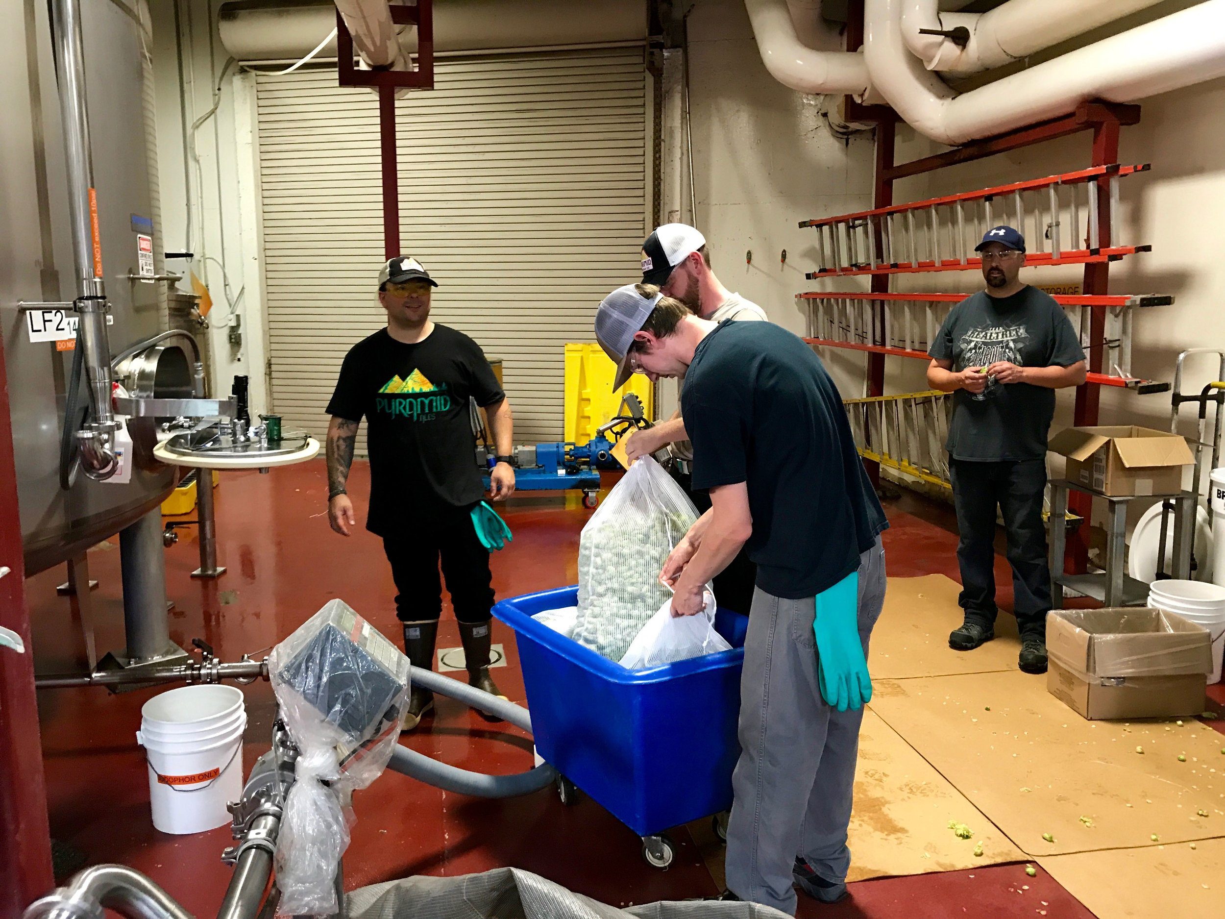 We arrive back to Pyramid Brewing in Portland. Brewers add 200 pounds of fresh centential hops to the kettle.
