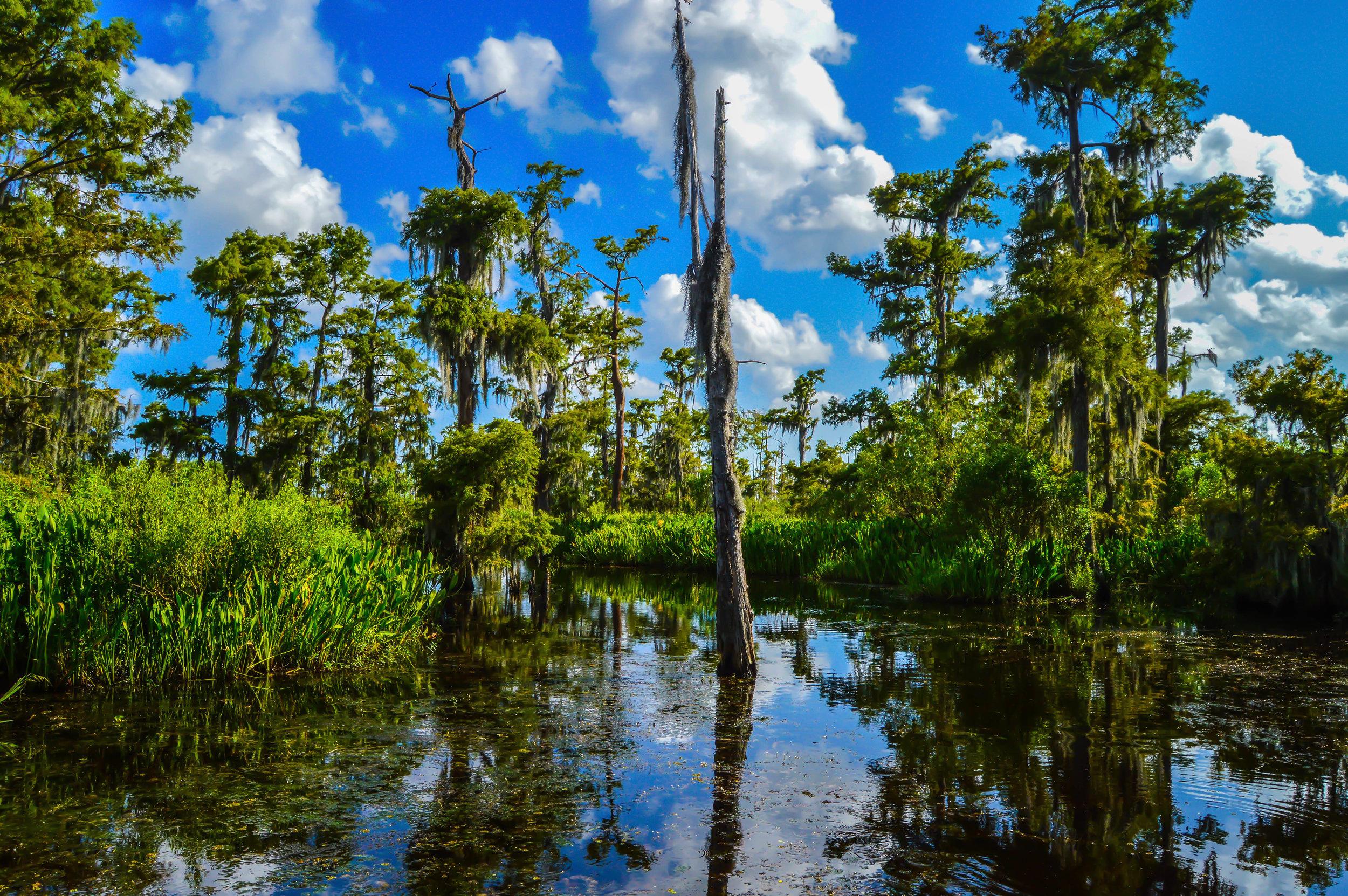Swamp Life.jpg