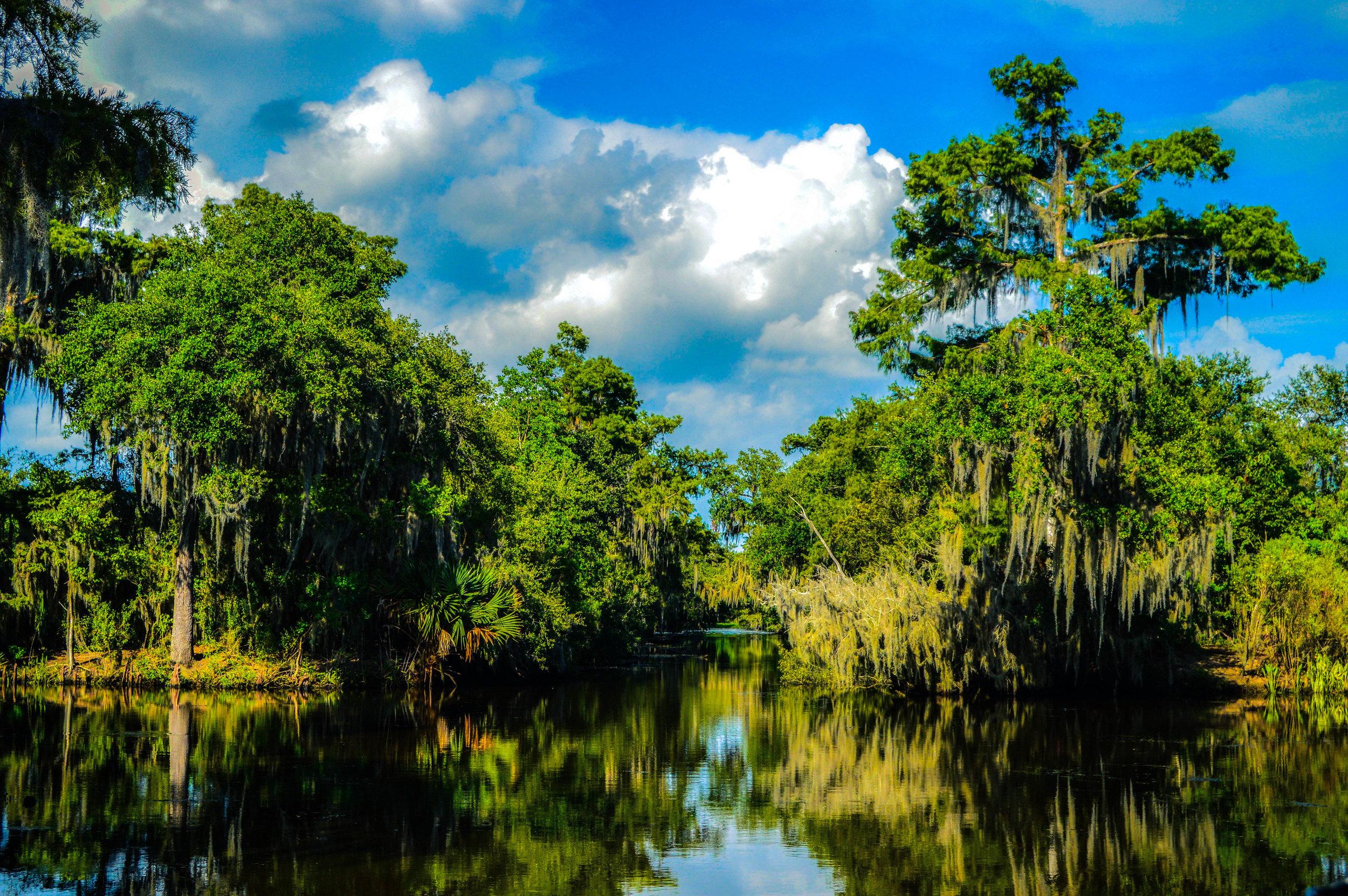 Swamp Channel.jpg