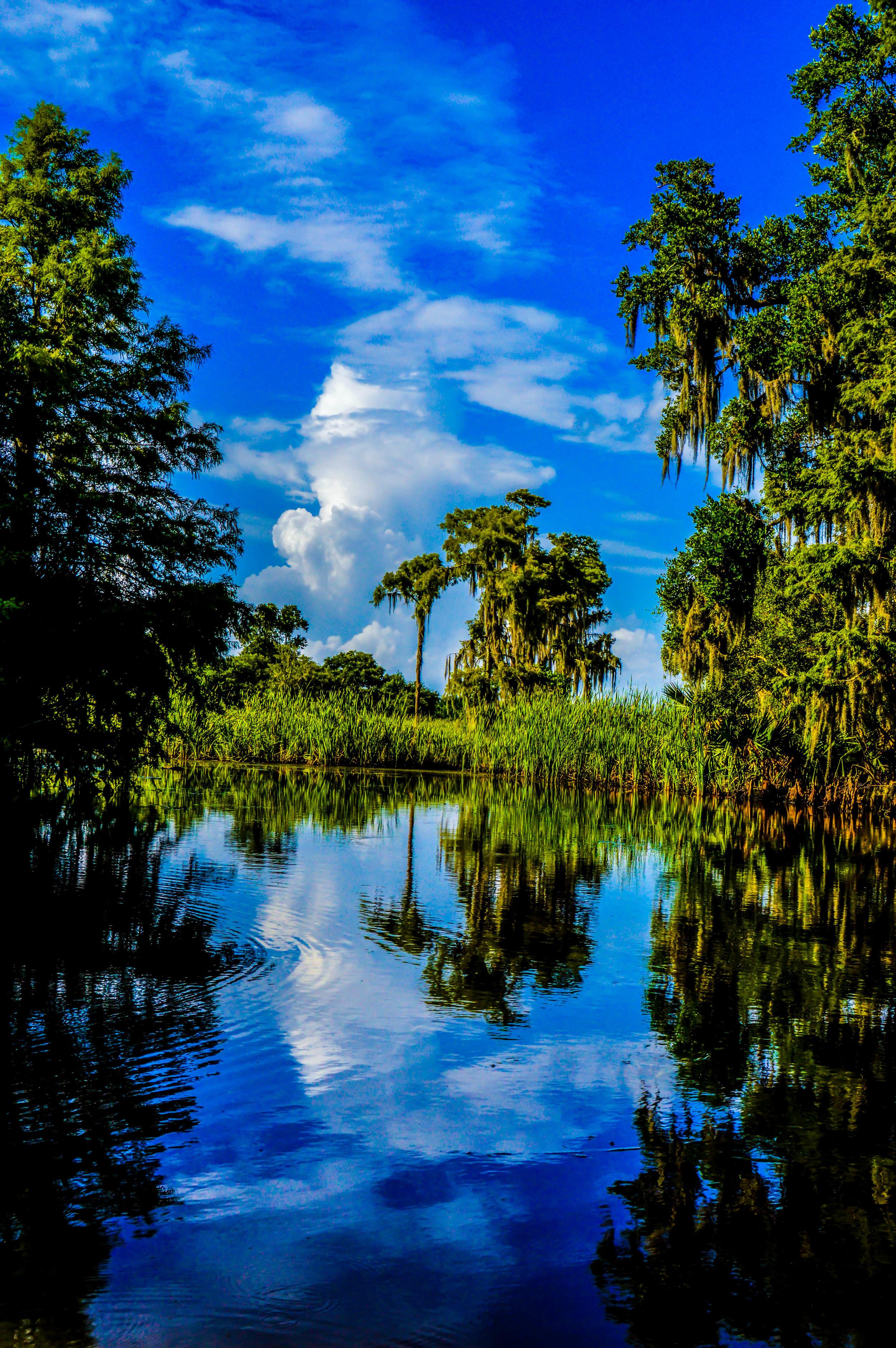 Peace in the Swamp.jpg