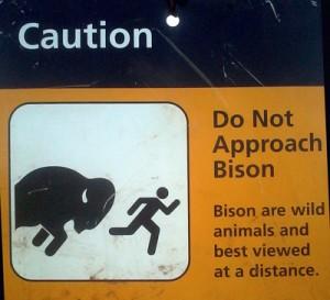 bison-300x273.jpg