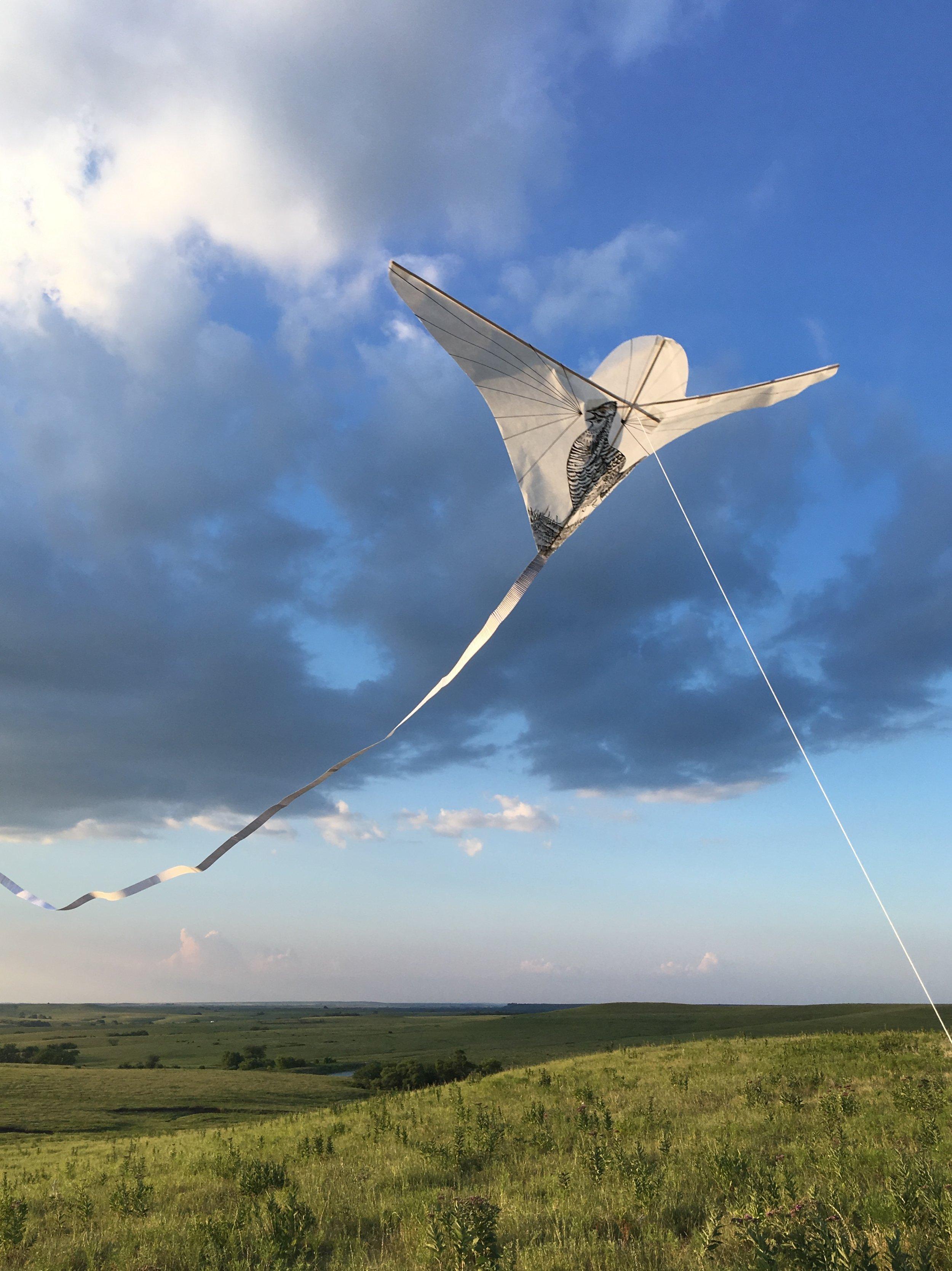 Chicken kite at the park