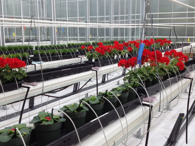 Horticultral Trials