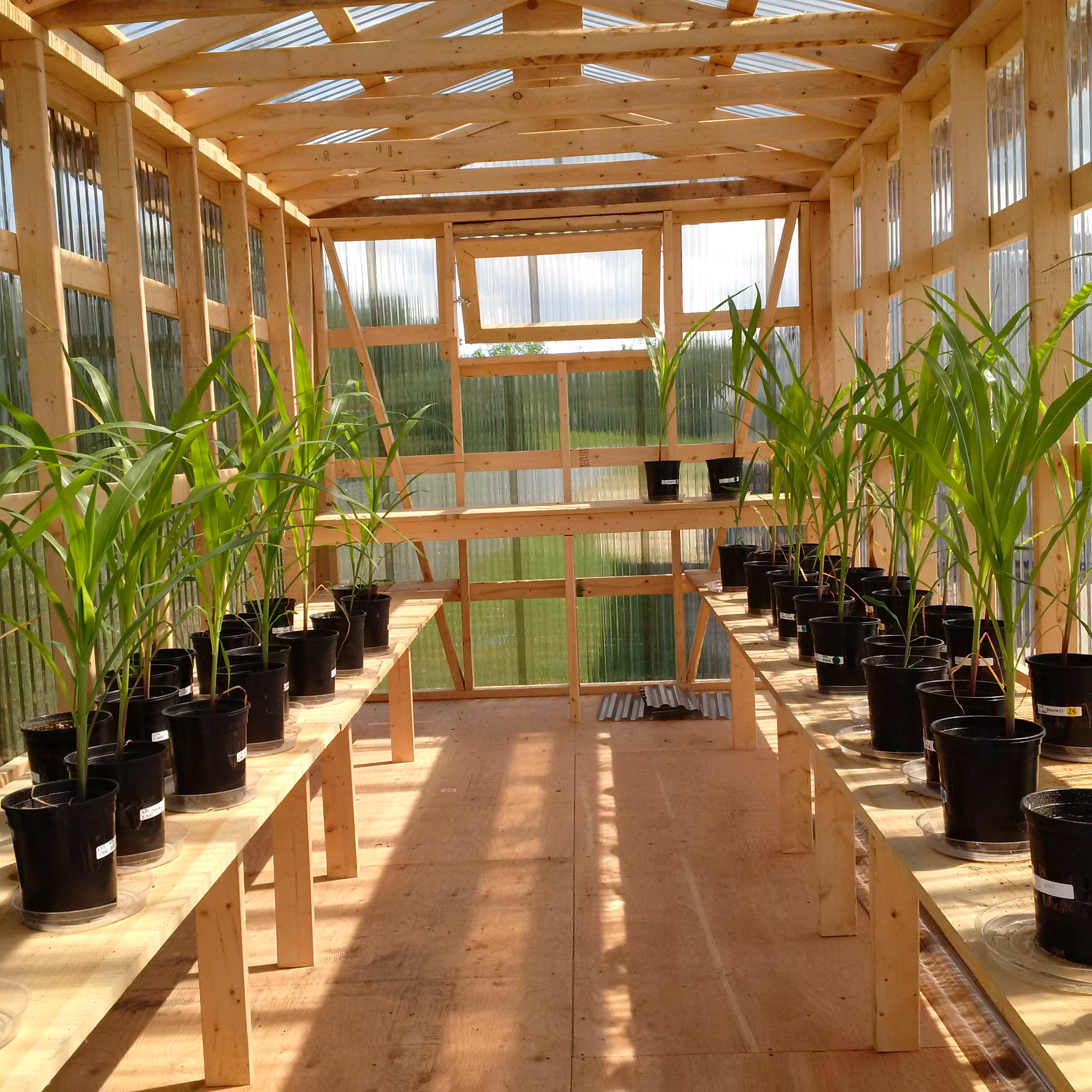 A trial using biosolids fertilizer and other fertilizer products
