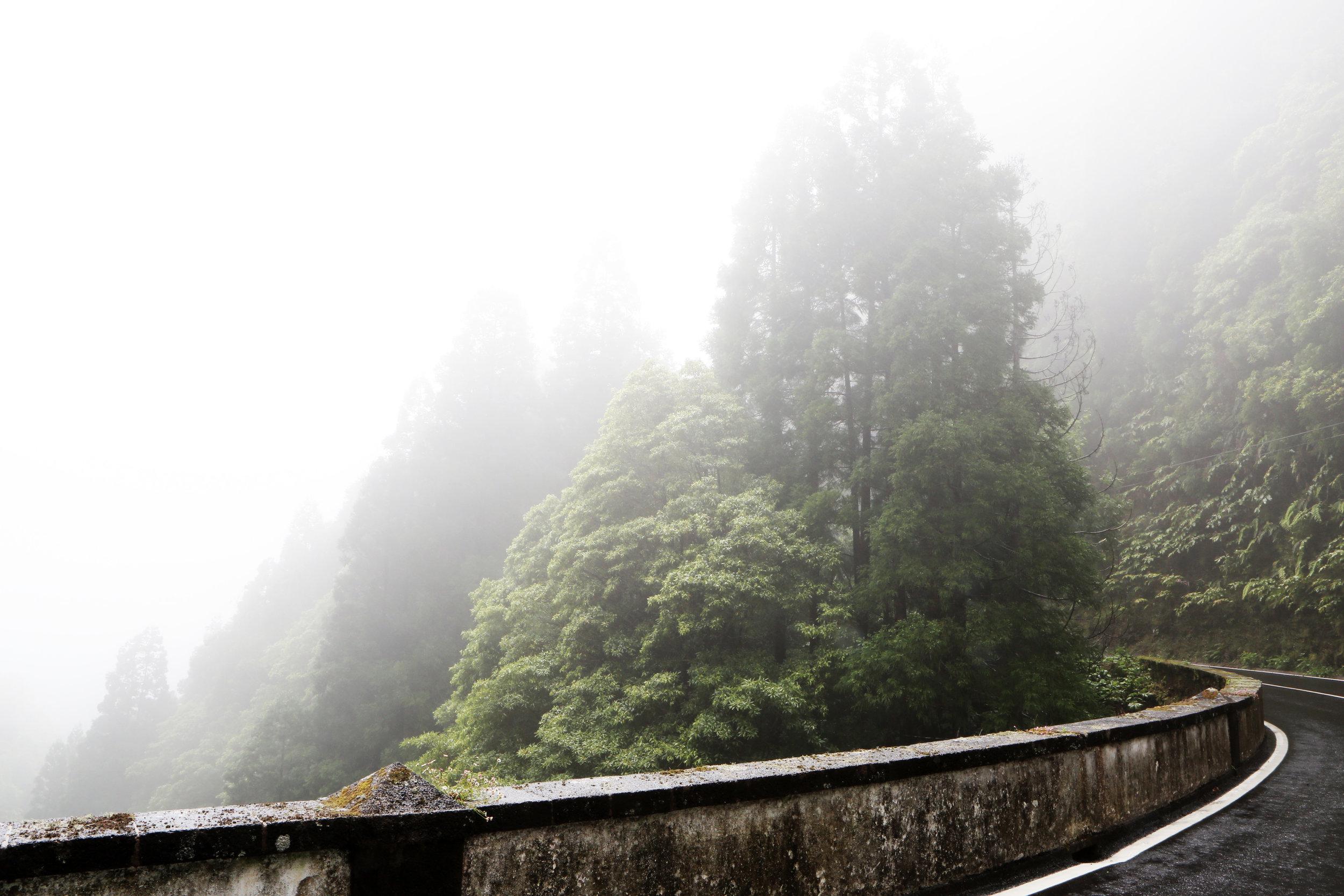2016-08-Life-of-Pix-free-stock-road-mist-trees-LEEROY.jpg