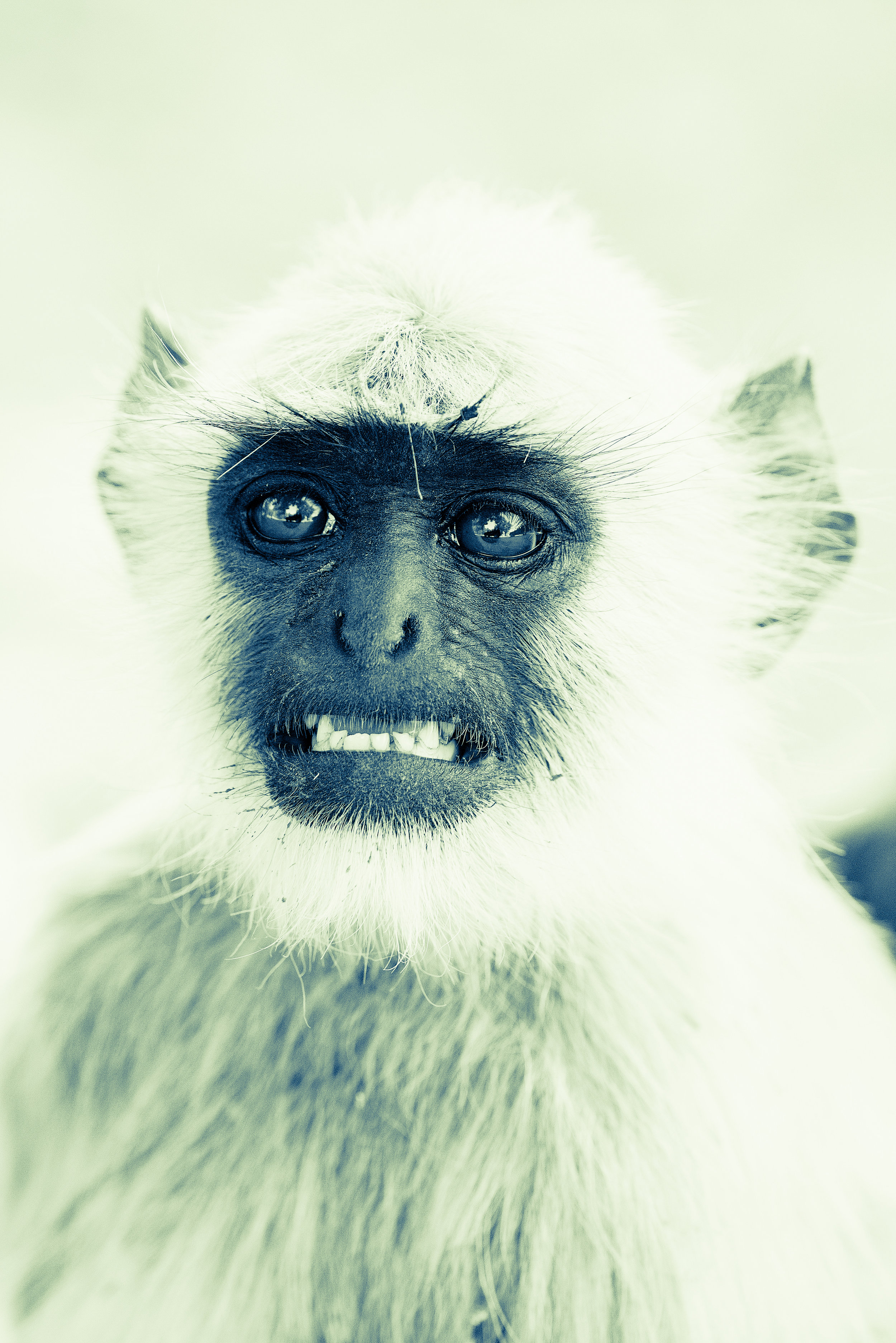 It's tough being a confused monkey.