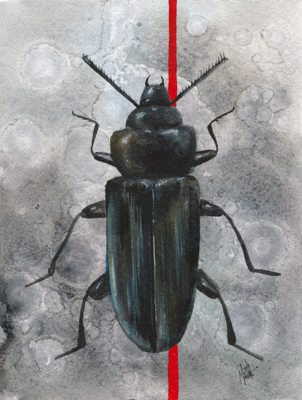 Beetle2_Web.jpg