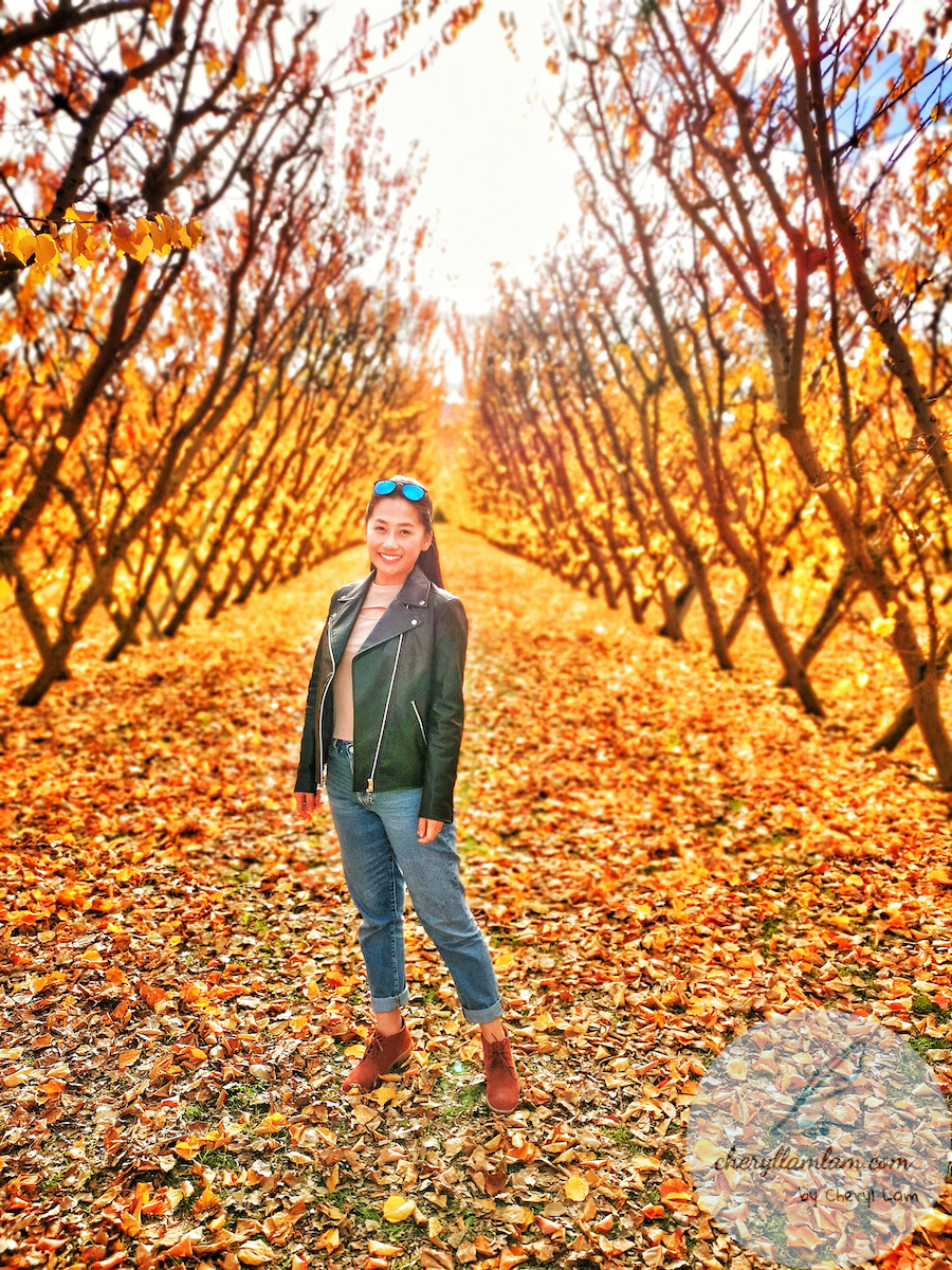 Jacksons Orchard New Zealand
