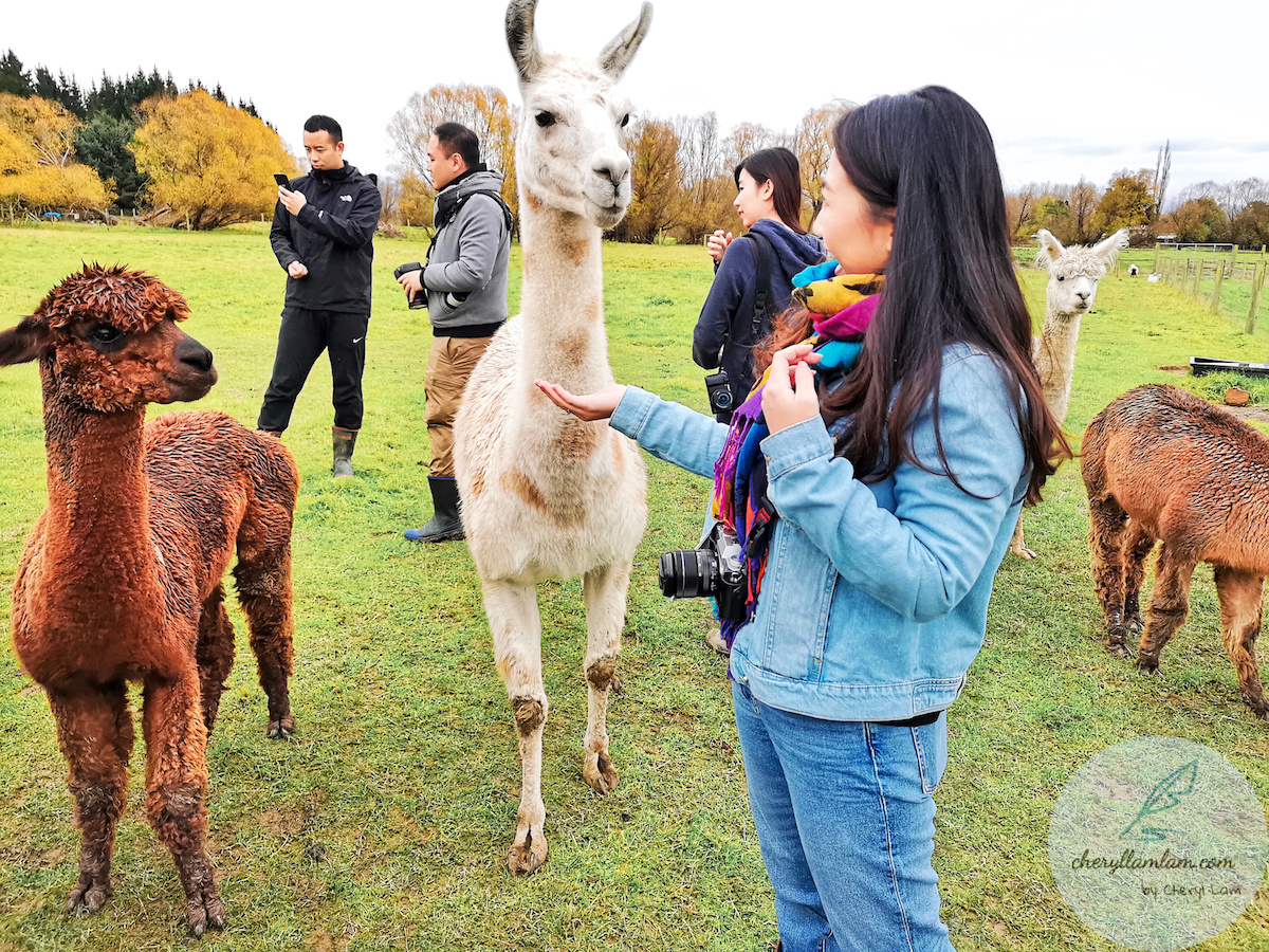 Gem Alpaca Stud New Zealand
