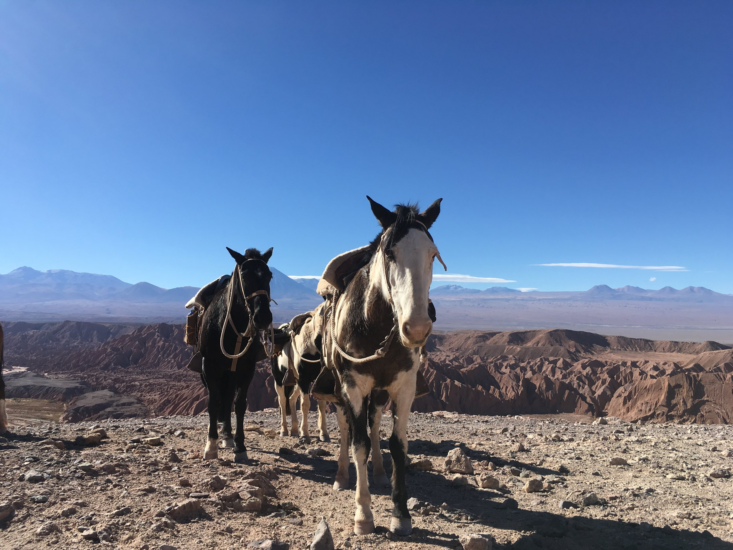 horseback riding above Valle de la Muerte