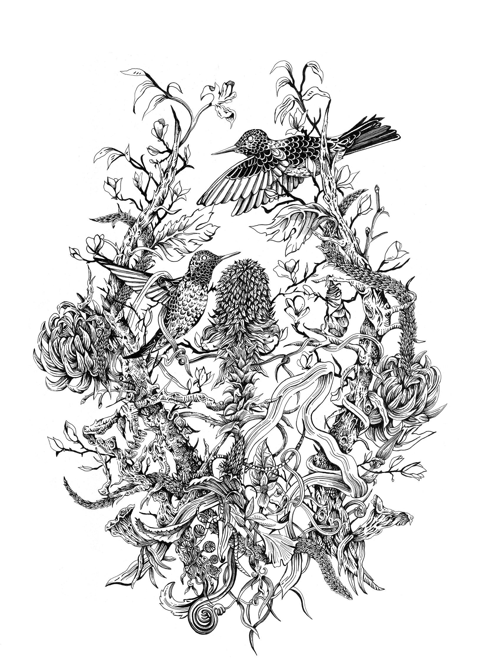hummingbirdssite.jpg