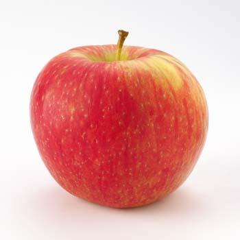 Honeycrisp    Sweet-tart flavor, juicy, super-crisp & yellow flesh   Harvest: Late September - Late October