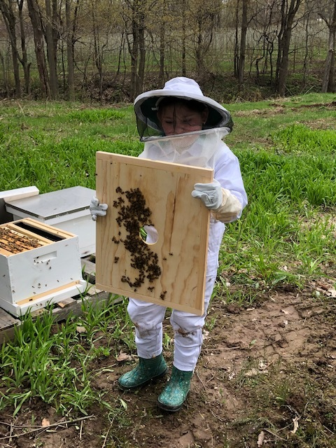 Bee keeper jacquie