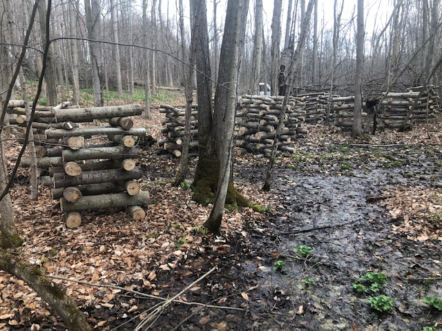 Mushroom logs just seeded