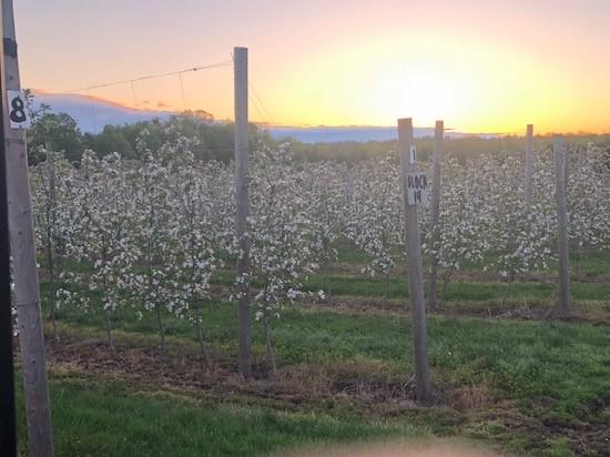 Sunrise during Bloom